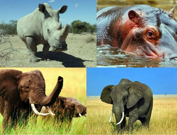 Какое животное самое большое