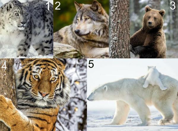 Крупные животные России фото