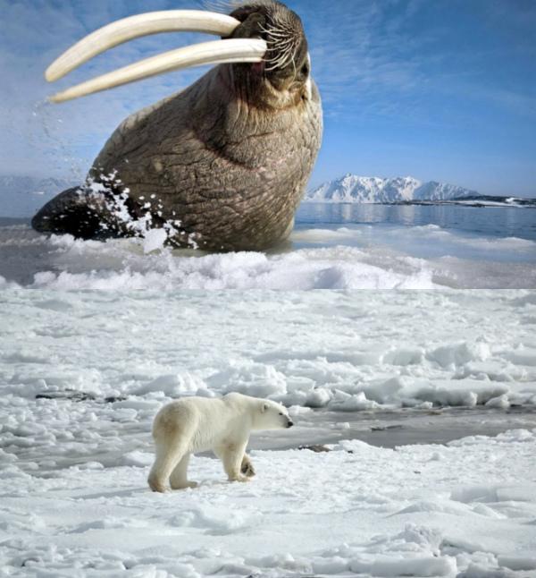 Животные Арктики фото