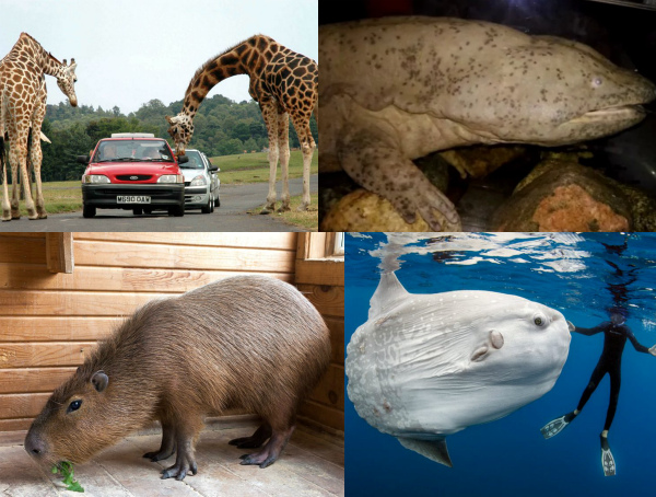 Самые большие животные фото