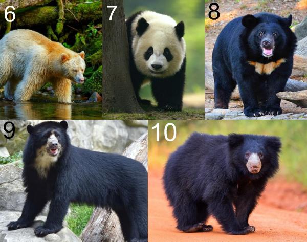 Большие медведи мира