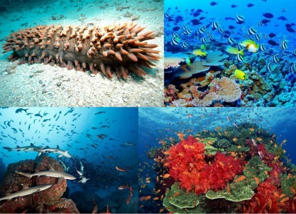 Какая рыба водится в Тихом океане